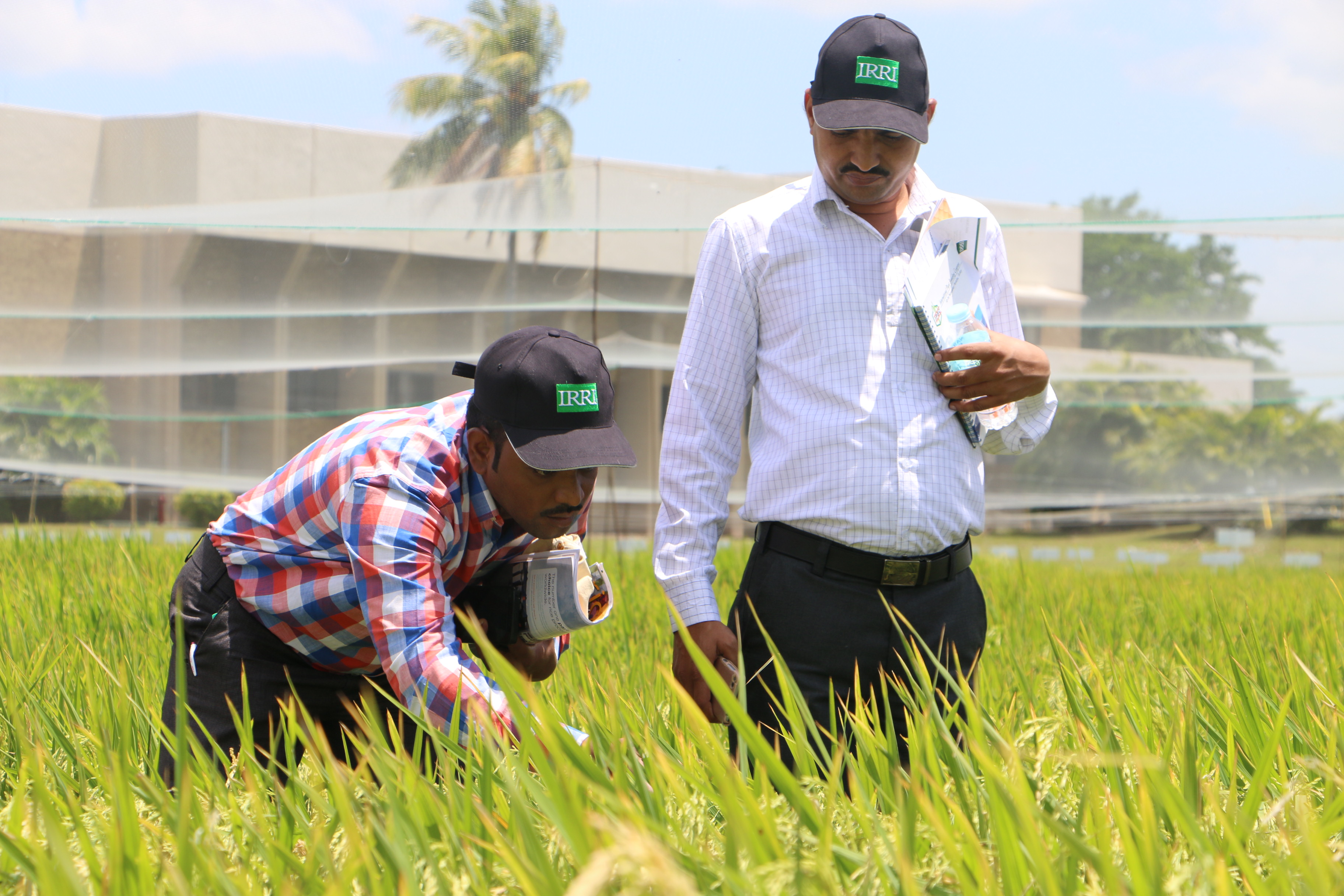 Membership to the Hybrid Rice Development Consortium (HRDC) for Indian nationals is now tax-free