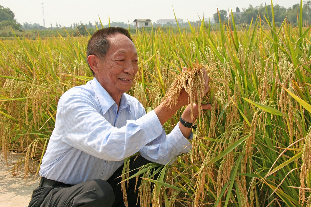 Rice Today: Hybrid rice for global food security