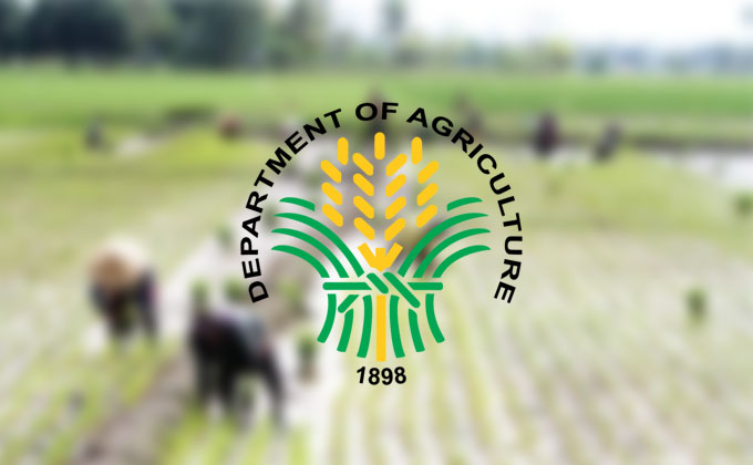 DA to focus on hybrid rice clustering