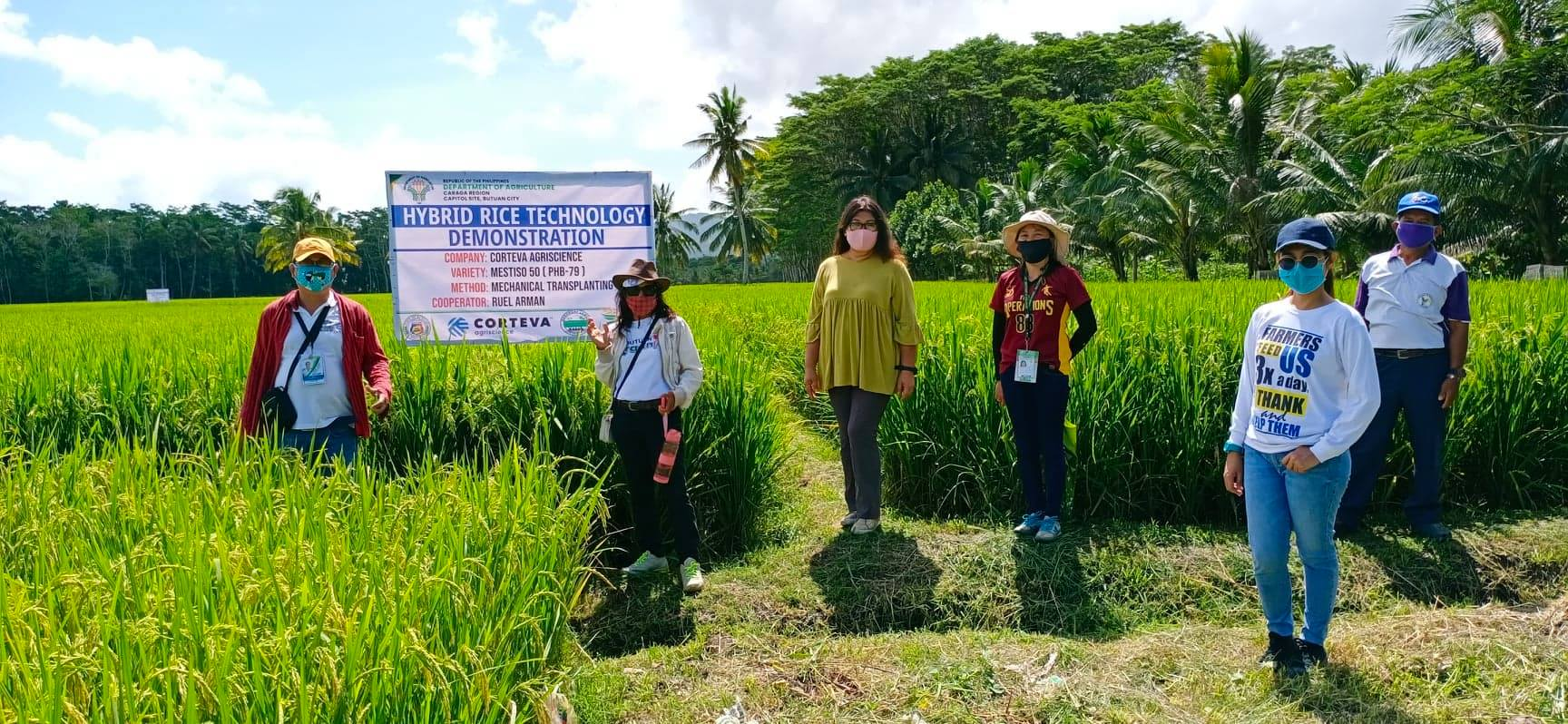 Hybrid rice model farm increases yield of Butuan farmers