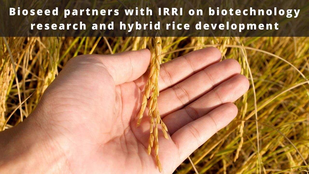 Bioseed partners with IRRI on biotechnology research and hybrid rice development