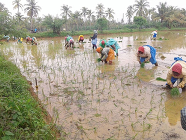 Hybrid rice: Corteva slowly making inroads into Bihar, Jharkhand; trains 90K woman farmers