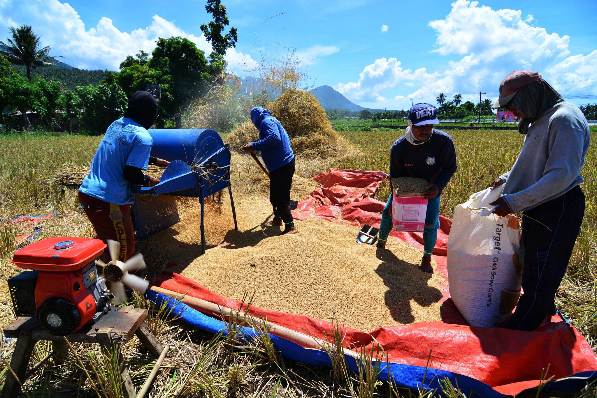 DA eyes bigger rice production in 2021