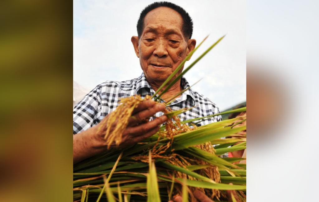 Yuan Longping: Simple life, great legacy